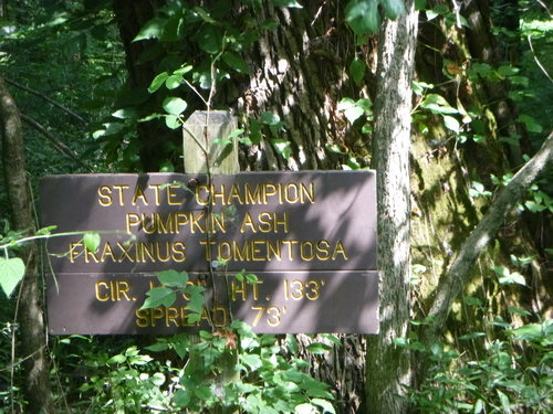 Trail sign for the champion pumpkin ash