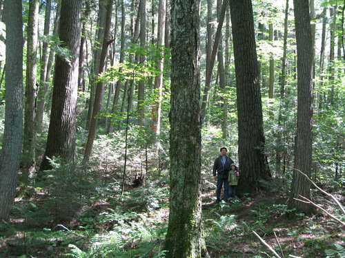 This is a picture of us near the taller pine with the thicker pine at the left side of the image.