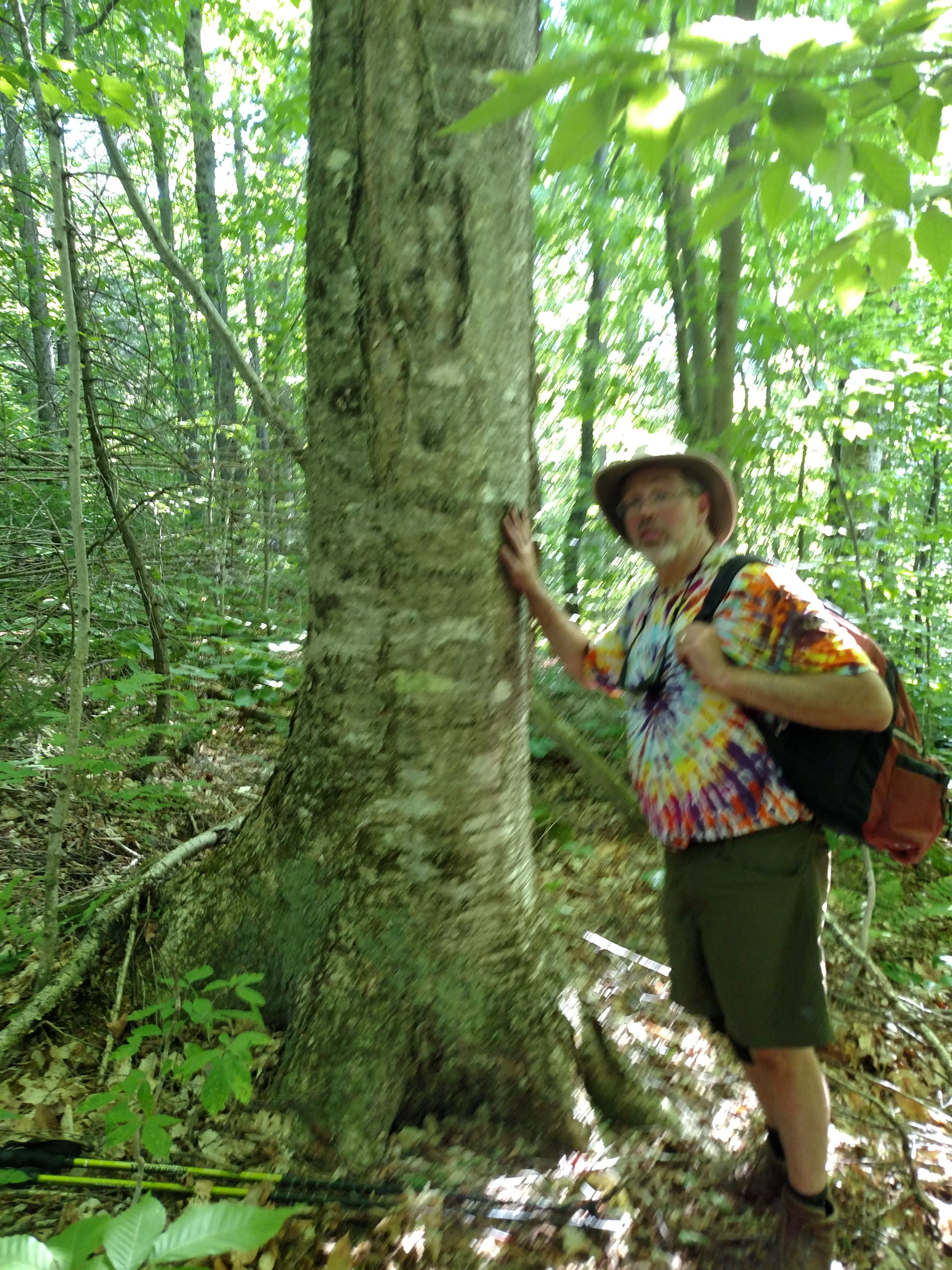 adam with buttressed root white birch.jpg