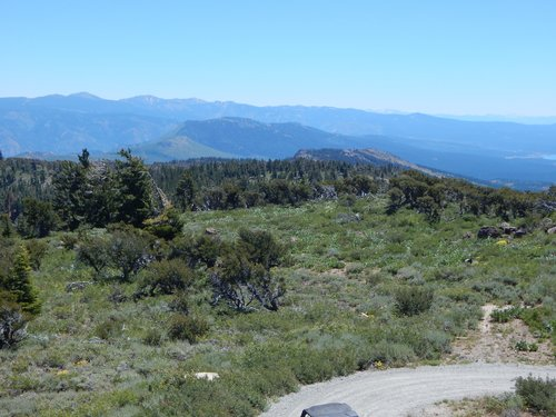 Mt. Rose, ~20 miles southwest, is home to another stand of Washoe Pine.