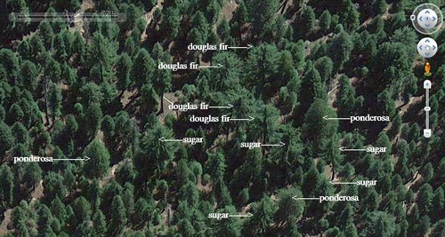 example of different species in a montane forest as seen from Google Earth