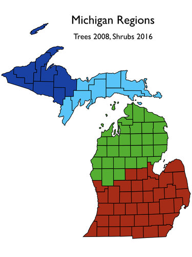 MichiganTrees.001.jpeg
