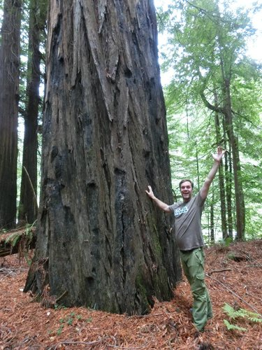 John under Waldo, one of the smallest known 350' class redwoods