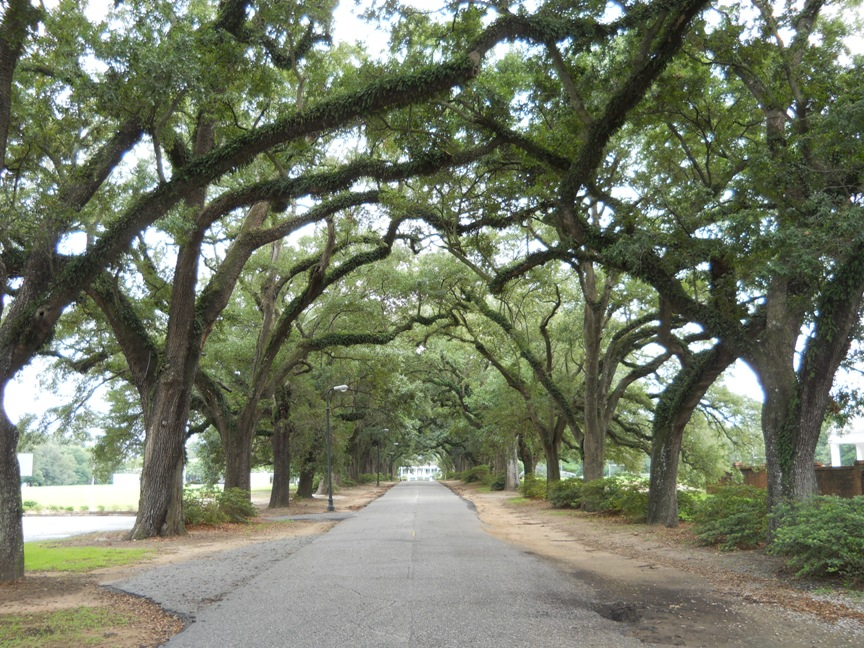 Avenue of Live Oaks.jpg