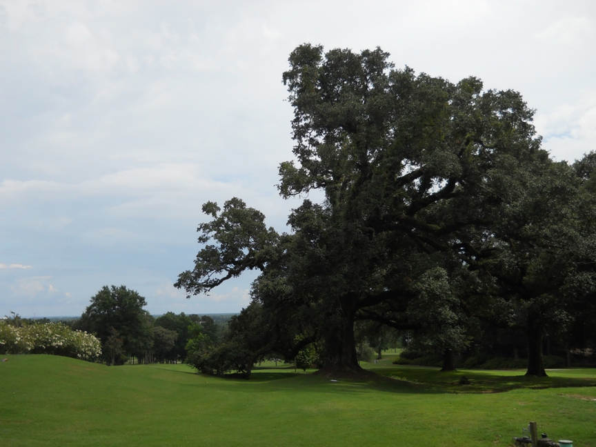 Springhill Golf Course Oak b.JPG