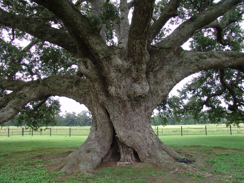 Maryland Farms Oak.jpg
