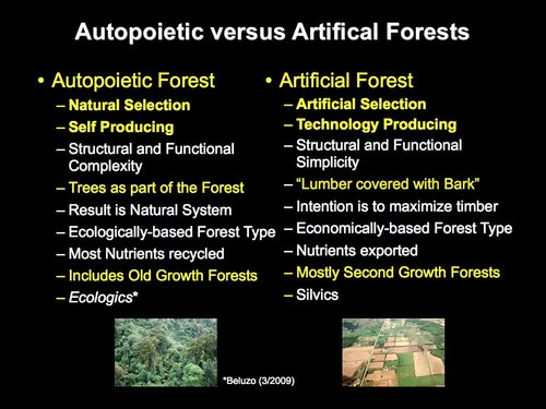 Autopoietic versus Managed Forests