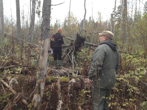 Kalev Jogiste at field site to examine effects of large-scale blowdown on forest regeneration