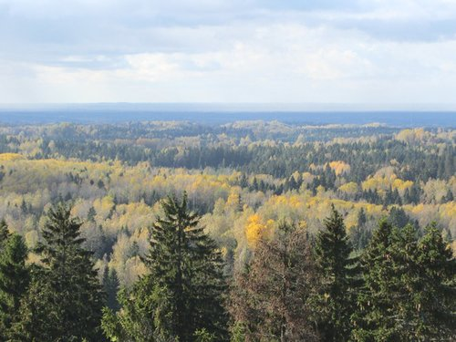 Forest view from highest point in Estonia--a mosaic of birch, spruce and pine characteristic of Estonian forests